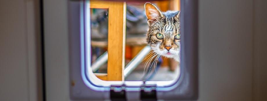 gatinho espião