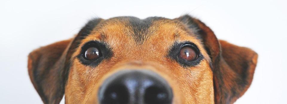 10 Objetos Engolidos por Cachorros