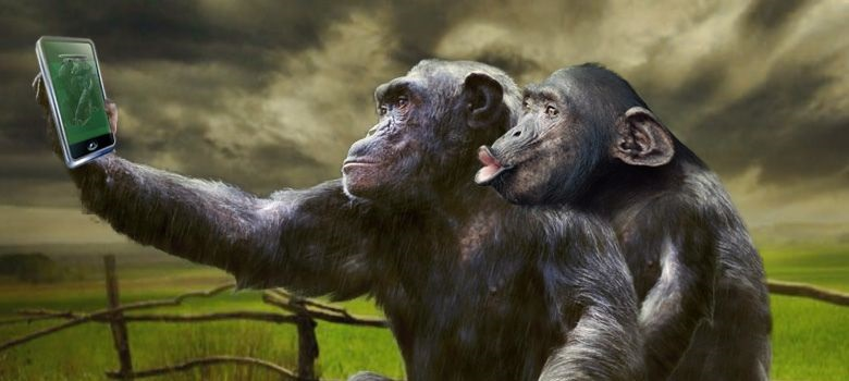 chimpanze utilizando instagram