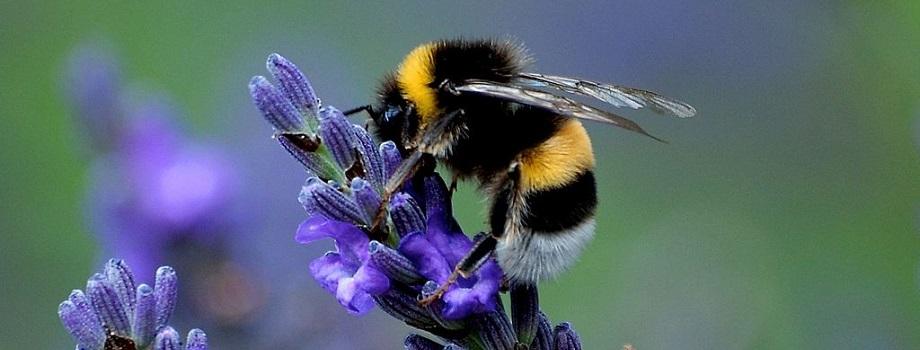 Quais os Tipos De Flores Que Mais Atraem As Abelhas?