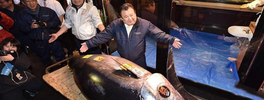 O Peixe Mais Caro do Mundo Custou 12 Milhões de Reais